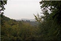 SE8353 : Millington wood by Martin Norman
