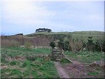 NS9799 : Law Hill Community Woodland by Richard Webb
