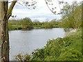 SK4530 : River Trent by Chris J Dixon