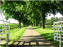 SU5375 : Entrance to Wyld Court Stud by Pam Brophy