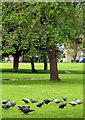 TQ2178 : Turnham Green Park by Pam Brophy
