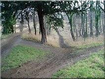 SE4625 : Fryston Wood by David Barrie