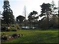 TL4557 : Cambridge University Botanic Garden by Niall Taylor