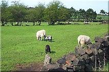 SK3458 : Farmland near Doehole by Garth Newton