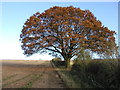 SE8253 : Autumnal Tree by Andy Beecroft