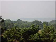 SZ0589 : Poole Harbour from Canford Cliffs by Kevin Danks