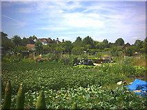 TQ2269 : Cottenham Park allotments, Cambridge Road. by Noel Foster