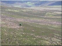 NT1258 : Moorland tree by Chris Eilbeck