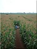 SJ7389 : Red House Farm, The Maize Maze by Dave Smethurst