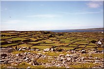 L9702 : Inisheer, Aran Islands by Angella Streluk