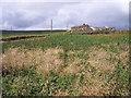 SD9932 : Thurrish farm by Mark Anderson