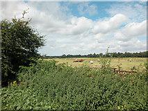 SJ3666 : Farmland at Higher Ferry by Dennis Turner