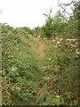 SP7705 : Swan's way - Bridleway near Ilmer by David Hawgood