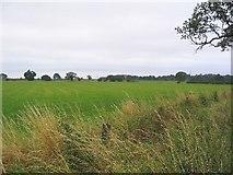 SJ7489 : Pasture by Dave Smethurst