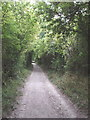 SP7701 : Bridleway with elder trees above Bledlow by David Hawgood