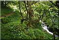 SX0789 : Tintagel: Rocky Valley by Martin Bodman