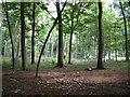 SU6983 : Bear Wood by Colin Bates