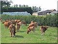 TA1647 : Seaton Farm by Stephen Horncastle