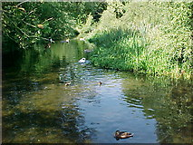 TQ0768 : The Splash, River Ash, Shepperton by Sheel