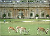 ST7475 : Dyrham Deer by Chris Shaw