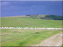 TQ3412 : South Downs Way, Western Brow looking west. by Simon Carey
