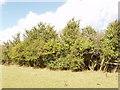 SP7609 : Hedge with hawthorn, near Haddenham by David Hawgood