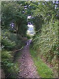 SJ9989 : Byway between Chatterton Lane and Brook Bottom by Dave Dunford