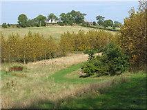 NS6871 : East Muckcroft Farm, near Kirkintilloch by Brian D Osborne