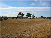 SE6248 : Straw bales and A64 by DS Pugh