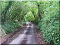 SX5352 : Devon Lane, Arcadia Elburton by Gwyn Jones