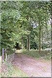 SO6230 : How Caple Wood by Philip Halling