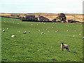 SE0342 : New Redcar Farm by David Spencer