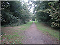 SJ4063 : Chester Approach to Eaton Hall by Dennis Turner