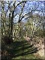 TL2284 : Woodwalton Fen NNR by Katie