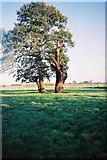 SU8772 : Tree, stump and farmland, Warfield by Andrew Smith