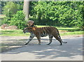 SP9634 : Woburn Safari Park Tiger Enclosure by Iain Thompson