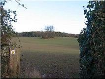 ST2183 : Fields near Cefn Mably by John Thorn