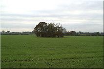 SJ5880 : Marl pit, New Manor Farm beyond by David Long