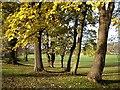 TQ7757 : Penenden Heath by Penny Mayes