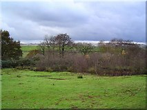 SX8675 : Beside the clayworks near Sandygate by Richard Knights