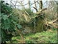SN1001 : Gumfreston Old Village by Angela Jones