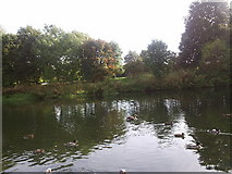 TL0799 : River Nene at Wansford by tim