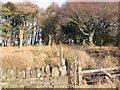 NY0320 : Tutehill Wood Middle Boundary. by John Holmes