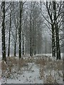TG2105 : Trees, Marston Marshes by Katy Walters