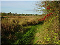 TF8015 : The Nar Valley Way west of Castle Acre by Colin Park