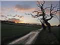 SU7797 : Collier's Lane Track by David Ellis