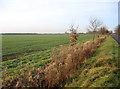 TL3147 : Farmland view, Wendy, Cambs by Rodney Burton