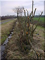 NY2442 : Hedge and Ditch by Bob Jenkins