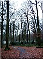 SP9206 : Widow Croft, Oak Lane, near Brazier's End by Rob Farrow