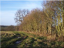 SO6350 : Hedge near Richley Farm, Stoke Lane by Bob Embleton